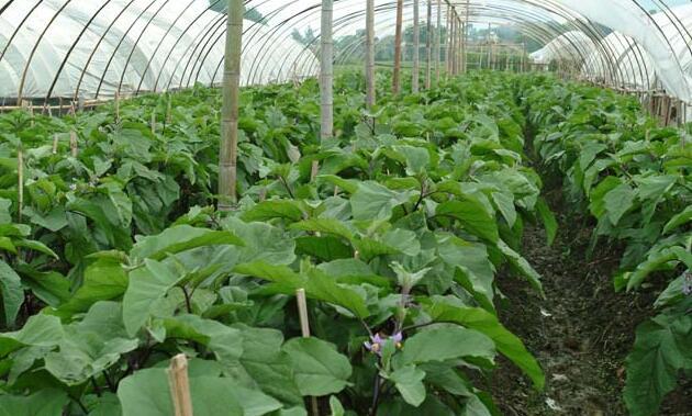 河南信阳市息县生态蔬菜种植基地及果蔬饮品、脱水蔬菜系列产品加工项目